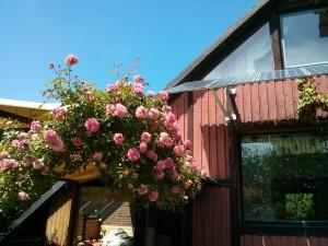 Garten in Wistedt